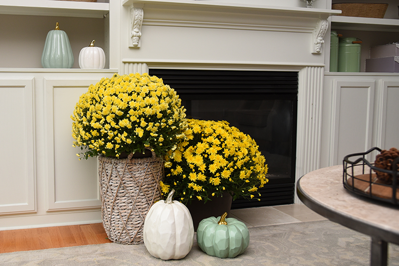How to Decorate for Fall - Details Full Service Interiors - Interior Design in Monson